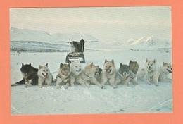 GROENLAND - CHIENS DE TRAINEAU - TIMBRE N° 95 - Greenland