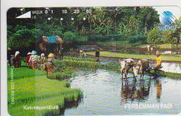 #09 - INDONESIA-14 - Indonesia