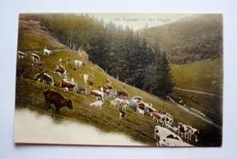 88 - DIE VOGESEN - LES VOSGES - Troupeau De Vaches - Non Classés