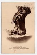 - CPA CHIENS - La Compassion Pour Les Animaux Conduit Au Dévouement Envers Les Hommes - Photo ADAM 1932 - - Chiens