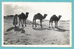 TUNISIE DANS LE GRAND DESERT 1957 - Tunisia