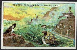 Aus Dem Leben Der Arktischen Vogelwelt & Reklame - Alte Papiere
