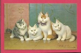 Gatti - Piccolo Formato - Non Viaggiata - Chats