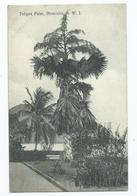 Postcard  Dominica Tolipot Tree  British West Indies    Unposted  Pub.j.r.h.bridgewater - Dominica