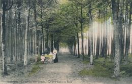 CPA - Belgique - Essen - Essehen - Drève Dans Le Bois - Essen