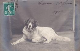 Carte Photo Chien 1910 - Perros