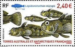 TAAF 2014. Antarktis Marine Life. Fishes    MNH** - Ungebraucht
