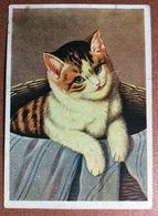 Vintage Soviet Ukraine Postcard 1930s CAT. Huge Green Eyes. Artist M. STOCKS - Katten