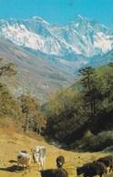 MONT EVEREST (dil279) - Népal