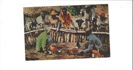 HAITI LOT DE 5 CARTES   DONT  COMBAT DE COQS  *****    A  SAISIR ***** - Haiti