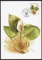 Tschechische Republik  1997  MiNr. 136  Maximumkarte ; Geschützte Pflanzen: Calla Palustris - Pflanzen Und Botanik
