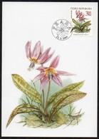 Tschechische Republik  1997  MiNr. 135  Maximumkarte ; Geschützte Pflanzen: Erythronium Dens- Canis - Pflanzen Und Botanik
