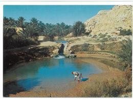 Tunisia Gabès L'oasis Non Viaggiata Condizioni Come Da Scansione - Tunisia