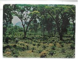 Etiopia Viaggiata 1983 Condizioni Come Da Scansione - Etiopia