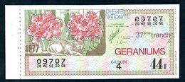LOTERIE NATIONALE 1977 - TRANCHE N° 37 = GERANIUMS ( FLEUR ) / BILLET ENTIER SUPERBE Complet De Sa Souche VOIR  2 SCAN - Billets De Loterie