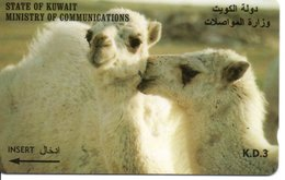Chameau  CAMEL Animal Télécarte Telefonkarten Phonecard (G 132) - Koweït