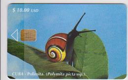 #09 - CUBA-03 - SNAIL - Cuba
