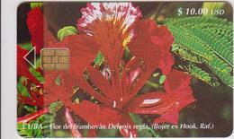 #09 - CUBA-12 - FLOWER - Cuba
