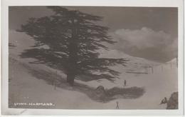 Asie ; LIBAN :  Vue , Arbre Le  Cèdre- Sapin ,  Studio  Haramnd, Ski - Liban