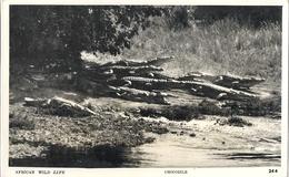 CPM Ouganda Africa Wild Life Crocodiles - Uganda