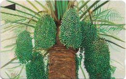 Bahrain - Al Khalal Palm Tree - 41BAHS (Dashed Ø), 1997, Used - Bahrain