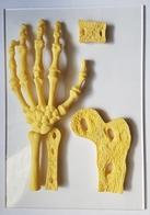 MATERIEL PEDAGOGIQUE - MEDICAL - ANATOMIE DE LA MAIN - OSSATURE - COUPE - PLEXIGLAS - 23 X 16 CM - Matériel Médical & Dentaire