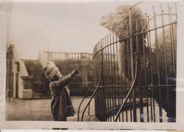 ZOO KATHLEEN M. NIGHT CHAMEAU KAMEL KAMEEL CAMEL ANIMALS ANIMALES ANIMAUX CAMELLO  16*12CM Fonds Victor FORBIN 1864-1947 - Personas Identificadas
