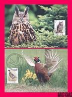TRANSNISTRIA 2019 Europa CEPT Theme Nature Fauna National Birds Owl Pheasant 2 Maximum Cards Set - Hiboux & Chouettes