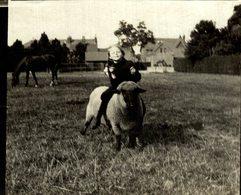 AMINAU ANIMALS ANIMALES   9*8 CM Fonds Victor FORBIN 1864-1947 - Lugares