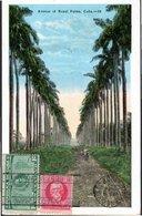 CPA CUBA 1928 - AVENUE DE ROYAL PALMA - - Postcards