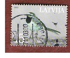 LETTONIA (LATVIA)   - MI 596  -      2003  BIRDS: MOTACILLA ALBA    -   USED - Lettonia
