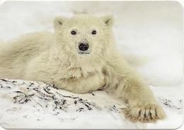 Calendar Russia 2019 - Animals - Polar Bear - Polar Bear - Beautiful. - Calendars