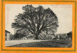 CPA - ETIVAL (88) - Thème : Arbre - Aspect Du Grand Chêne à L'entrée Du Bourg Au Début Du Siècle - Etival Clairefontaine
