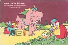 B Plantes D'Or Eléphant, Cueillette De La Camomille - Publicité