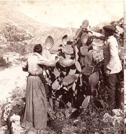 AK-1700/ Taormina Ernte Der Kaktusfeigen Italien  Stereofoto V Alois Beer ~ 1900 - Stereoscopio