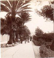 AK-1683/ San Remo Corso Ponente Italien  Stereofoto V Alois Beer ~ 1900 - Photos Stéréoscopiques