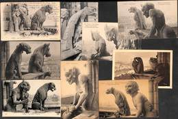 Paris Notre Dame  - Lot Of 9 Postcards Gargouille Chimère.... Petit Prix/ Attractive Price - Notre Dame De Paris