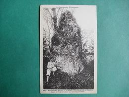258.  -  Maupertus  (Manche)  -  Le Menhir  -  Il Se Trouve Près Du Cimetière - France