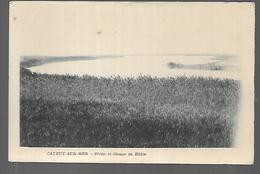 Cpa 8020081 Cayeux Sur Mer Pêche Et Chasse Du Hable - Cayeux Sur Mer