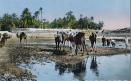 SCENES ET TYPES - Chameaux Dans L'oasis - Escenas & Tipos