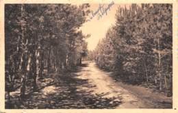 CHAUMONT-GISTOUX - Chemin Du Sous-Bois - Chaumont-Gistoux