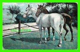 CHEVAUX - UN BEAU BRUN &  UN BEAU BLANC - CH - TILL VEIT EN 1901 - No 923 - - Chevaux