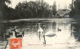 21 - Beaune - Cygnes Au Parc De La Bouzaize - Beaune