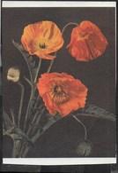 PAPAVERI - EDIZ SAEMEC  S/097 - VIAGGIATA 1964 - Fiori