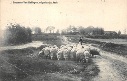 J Goosen Van Ratingen Négotion à Asch NEDERLAND - Pays-Bas