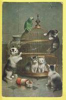* Fantaisie - Fantasy - Fantasie * (T.S.N. Série 1786 6 Dess) Chat, Kat Cat, Katze, Papegaai, Kooi, Cage, Perroquet - Chats