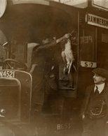 MOTOR OMNIBUS ARIVES PHEASANTS  ROTHSCHILD COCINERO KOCH FOOD COMIDA CUISINIER 21 * 16 CM Fonds Victor FORBIN 1864-1947 - Coches