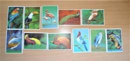 Serie Del Año 1969 Dunkin Super Cromop Tema Aves,muy Bonito. - Books, Magazines, Comics
