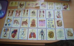 Cromos Del Album Color Y Vida Años 60,anatomia. - Andere