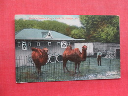 Molia's Camels Krug's Park St Joseph Mo.       Ref 3351 - Other